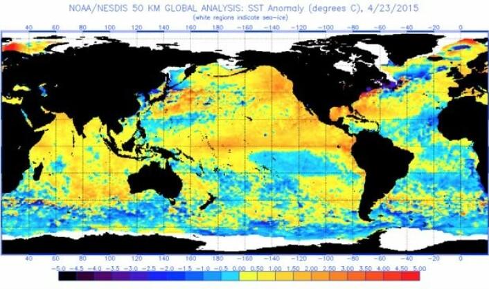 Mens vi snakker om temperatur og vanndamp og sånt: Slik var satellittmålt SST-anomali ved arbeidsukens slutt. Det er en liten El Ninjo i Stillehavet, og dessuten varmt i Det indiske hav. (Bilde: NOAA)