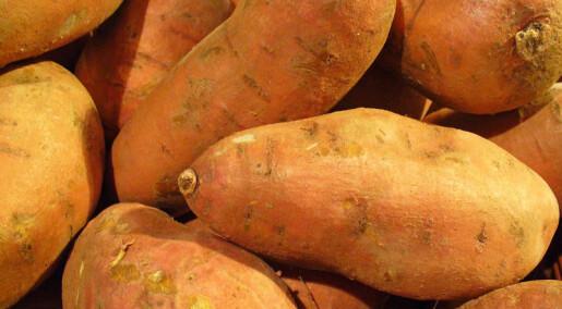 Søtpoteter er naturlig genmodifiserte