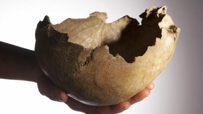 De skarpe kantene på hodeskallen ble pusset og slipt slik at menneskene kunne spise og drikke fra den.  (Foto: Derek Adams, The Trustees of the Natural History Museum, London)
