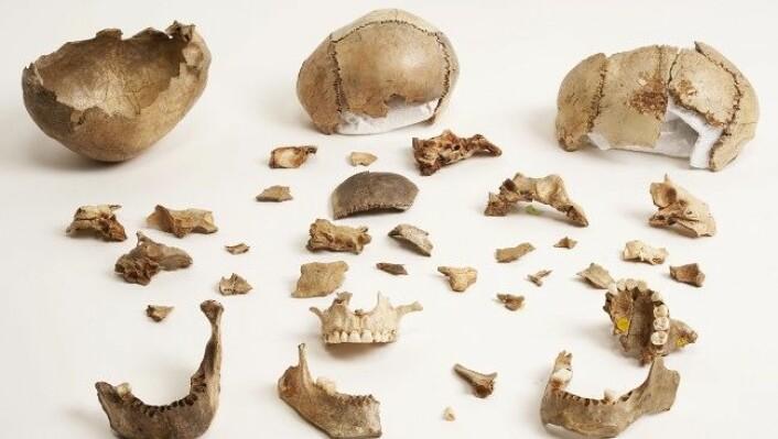 Flere som levde i steinalderen, spiste likene av fiendene sine som et ritual for å tilegne seg deres egenskaper. (Foto: Derek Adams, The Trustees of the Natural History Museum, London)