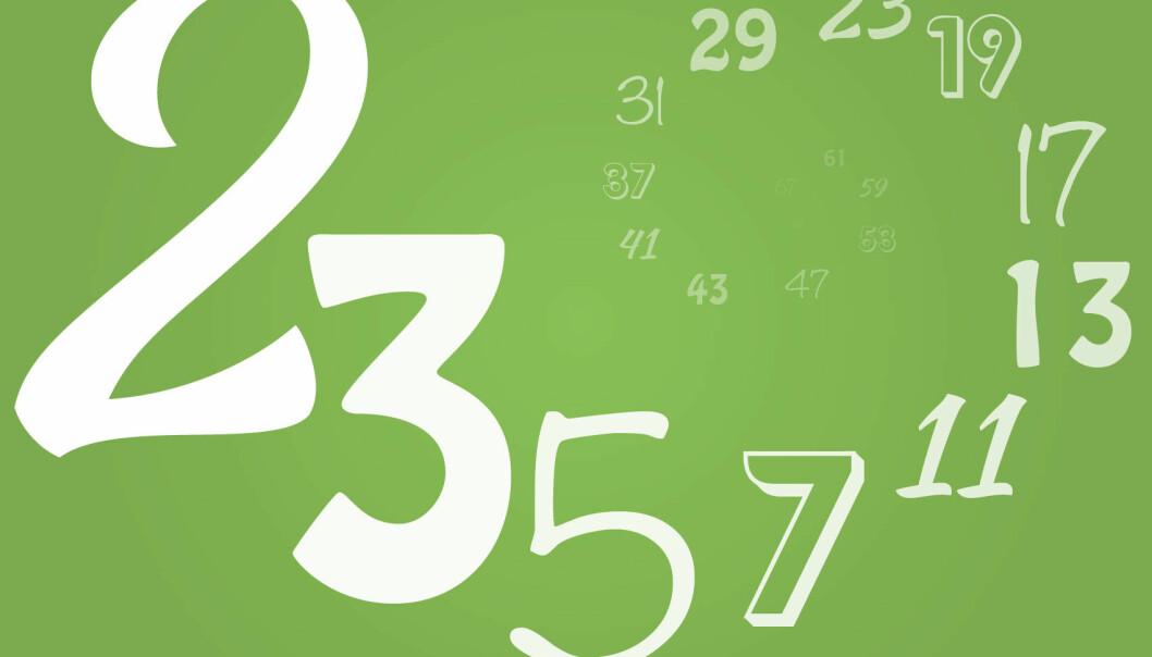 Det finnes uendelig mange primtall. Det beviste grekeren Euklid lenge før begynnelsen av vår tidsregning. Siden den gang har tallene som bare kan deles på seg selv og 1, frustrert og inspirert grå hår i hodene på generasjoner av matematikere. I løpet av de siste årene har primtallene våknet til liv, og matematikken nærmer seg nå beviser for hvordan primtallene oppfører seg der de forsvinner ut i uendeligheten. (Illustrasjon: Solveig Borkenhagen)