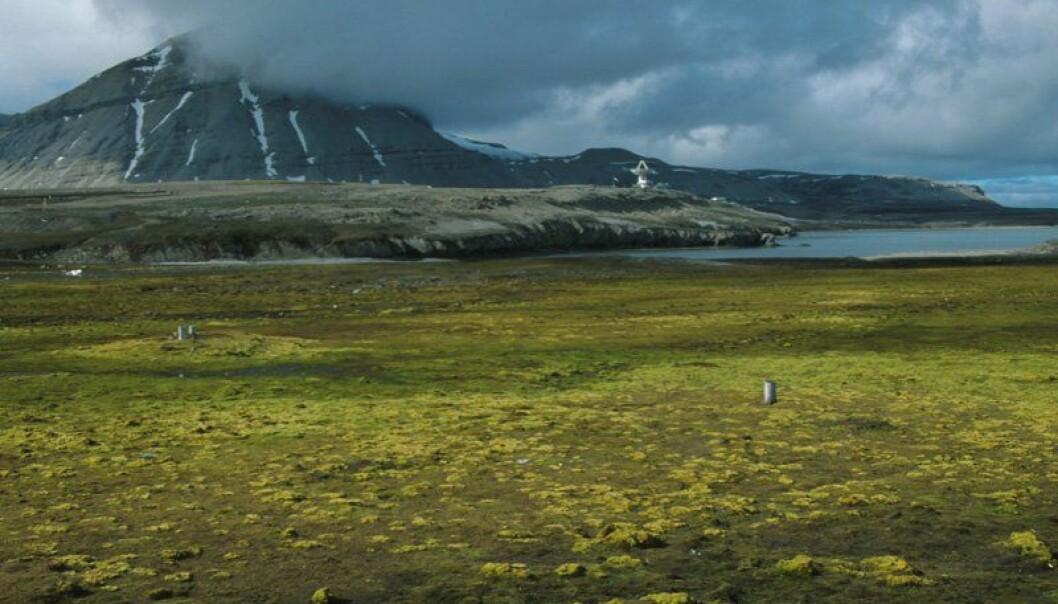 """Tundraen på Svalbard. Svalbard er et av områdene som kan være med på å øke konfliktnivået i Arktis.(Foto: MW Hammer / Norsk Polarinstitutt)"""" (Foto: MW Hammer / Norsk Polarinstitutt)"""