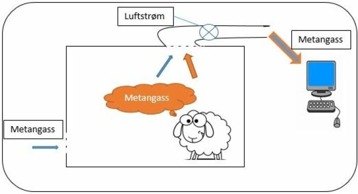 Metangass fra omgivelsene blander seg med metangass fra sauen inne i respirasjonskammeret. Gassen trekkes ut av kammeret og inn i en maskin som analyserer gassen og registrerer total mengde metangass. (Foto: (Illustrasjon: Bioforsk))
