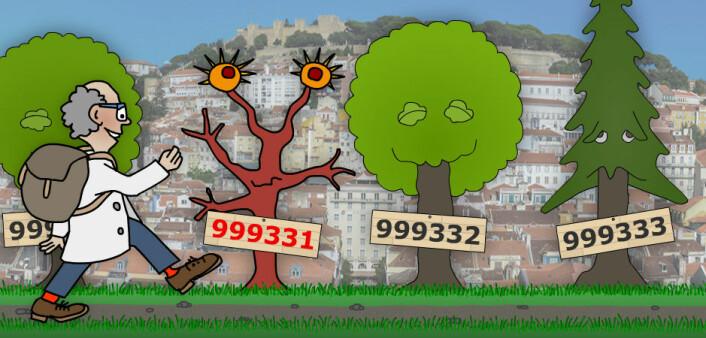 Langt om lenge kom matematikeren til et artig primtall, nede ved Lisboa i Portugal. Som man ser, er primtallene noe for seg selv, også rent botanisk sett. Dette primtallet er dessuten spesielt, selv til å være primtall. Hvis du tar det venstre sifferet og flytter lengst til høyre i tallet, er det fortsatt et primtall. Dette kan du gjøre så mange ganger du vil. Det kalles et sirkulærprimtall. Partallene er, som man ser, mer optimistisk anlagte løvtrær. (Illustrasjon: Arnfinn Christensen. Foto: Flexikon, Creative Commons)