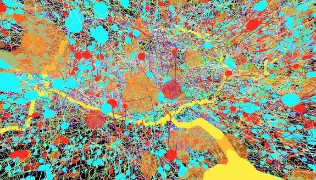 Det ligner mest på et moderne maleri, men det er en del av sentralnervesystemet i en bananflue.  (Foto: Albert Cardona, Wellcome Images)