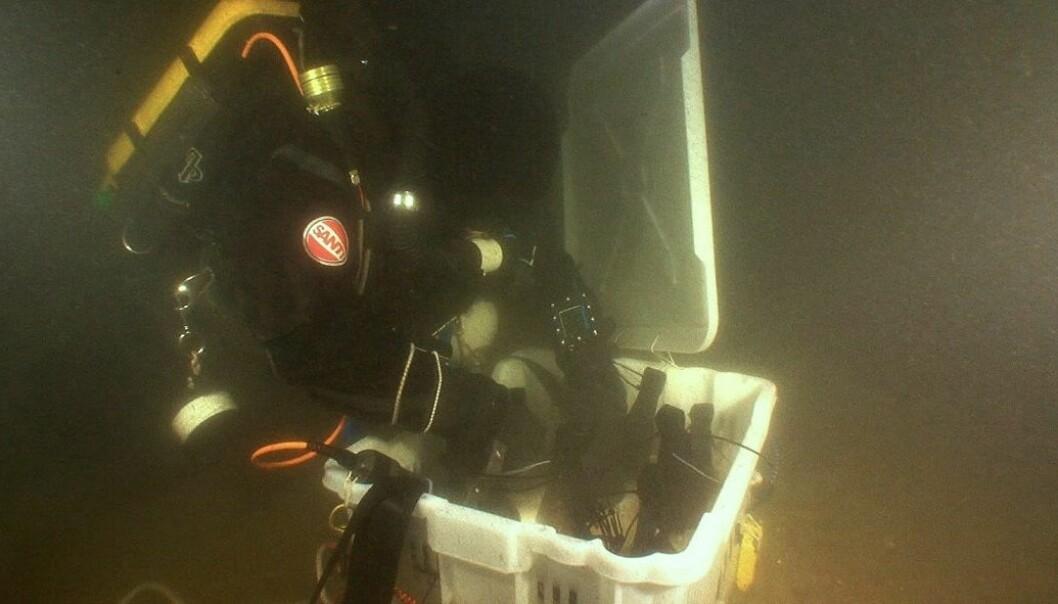 En dykker samler sammen noen av champagneflaskene som ble funnet utenfor Åland i 2010. (Foto: Anders Naesman Salvage Services/Epa)
