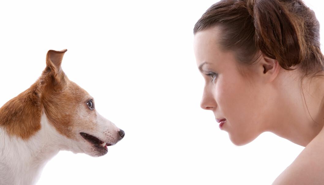 Evnen til å lese ansikter er et resultat av tamhunders tilpasning til mennesker. (Foto: Microstock)