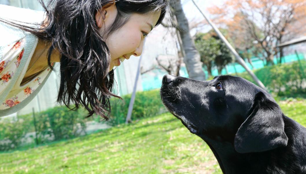 Her ser du Hook, en av hundene i eksperimentet, sammen med en student fra studien. Stirring som dette setter fart i kjærlighetshormoner hos hund og eier. (Foto: Mikako Mikura)