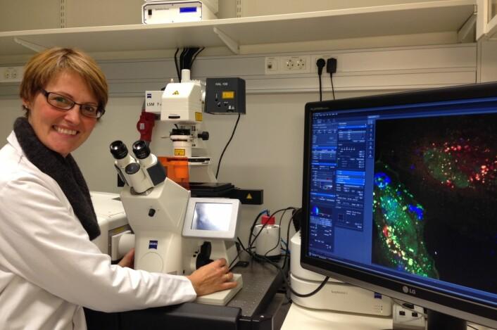 Forsker Camilla Raiborg ved konfokalmikroskopet. (Foto: Nina Marie Pedersen)