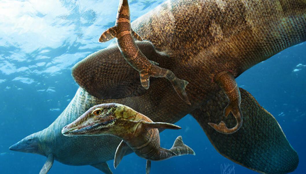 Mosasaur-familie i det fri, slik en kunstner har sett det for seg. Mosasauren kan ha født levende unger, i motsetning til mange andre reptiler. (Bilde: Julius T. Csotonyi)