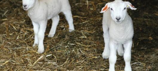 Fra fårikål om høsten til grillam i fellesferien