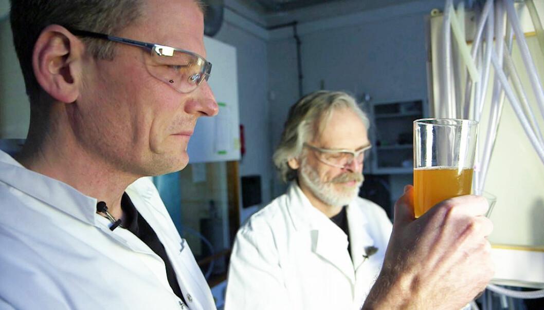 Interessen for norsk øl har aldri vært større, og NTNU har fulgt trenden ved å lage et eget mikrobryggeri i en lab på campus. Her brygges, testes og analyseres ølet ned i minste detalj.  (Foto: Roger Myren, NRK)