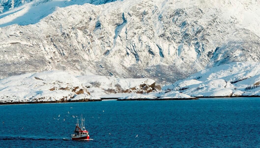 De aller fleste fiskebestandene forvaltes hver for seg. (Foto: Jan Helge Fosså, Havforskningsinstituttet)
