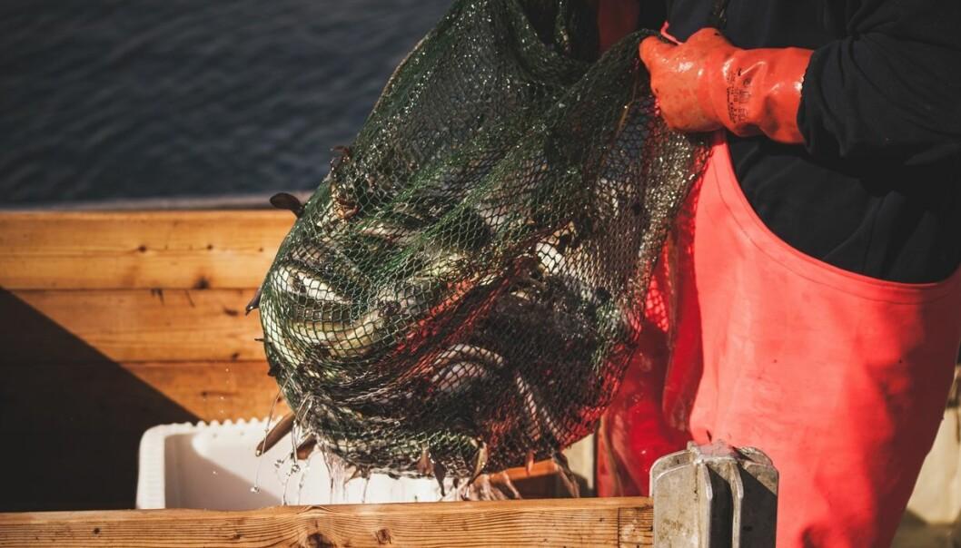 Fiskeværene tjener penger på turistene. Men er det likevel lurt å overføre kvoter fra fiskeri- til reiselivsnæringen?  (Foto:  Shutterstock)