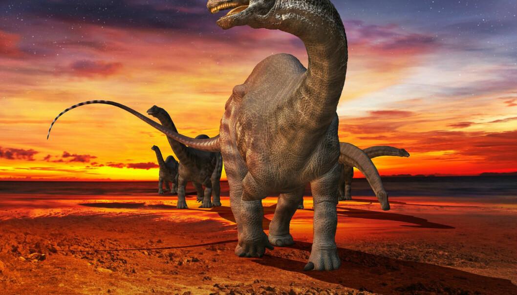 Brontosaurus eller apatosaurus? I over hundre år har man trodd at de var én og samme art. (Foto: Science Photo Library, NTB scanpix)