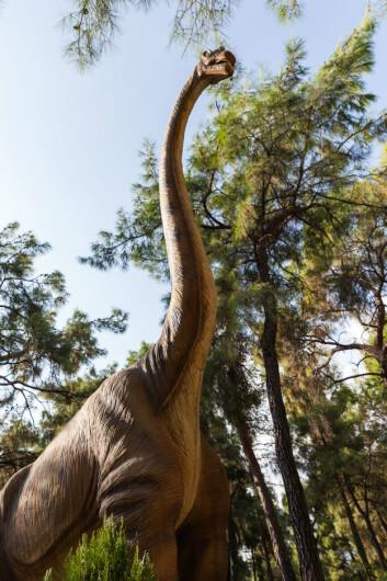 Hadde du egentlig fått med deg at brontosaurus egentlig ikke har vært regnet som en egen art på over hundre år? På bildet: en brachiosaurus. (Foto: Colourbox)