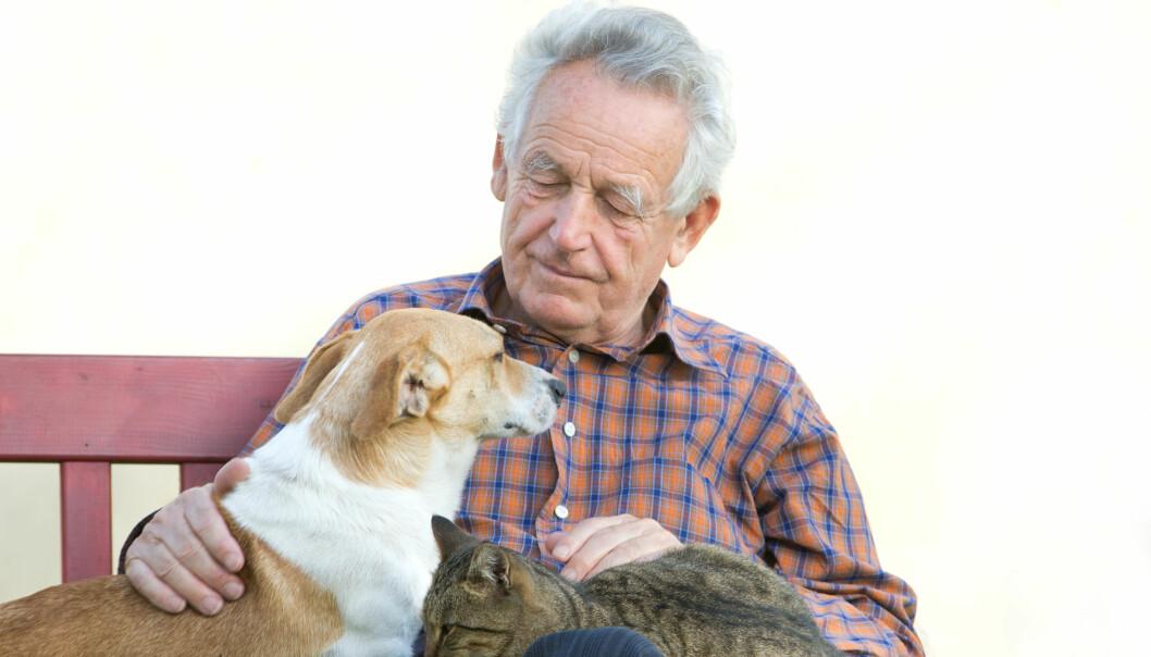 Hvis hunden eller katten bytter eier, kan minnet om den gamle eieren sitte i lenge. (Foto: Colourbox)