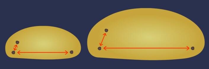 Universet utvider seg. Hvorfor farer de fjerneste delene av universet fortest vekk fra oss? Tenk på universet som en bolledeig til heving. Vi sitter på rosinen til venstre. Naborosinen ovenfor flytter seg ikke så langt unna når deigen heves. Rosinen til høyre i andre enden av deigen, altså universet, har fjernet seg mye mer. Den beveger seg fortest fra oss. (Foto: (Figur: Arnfinn Christensen, forskning.no))