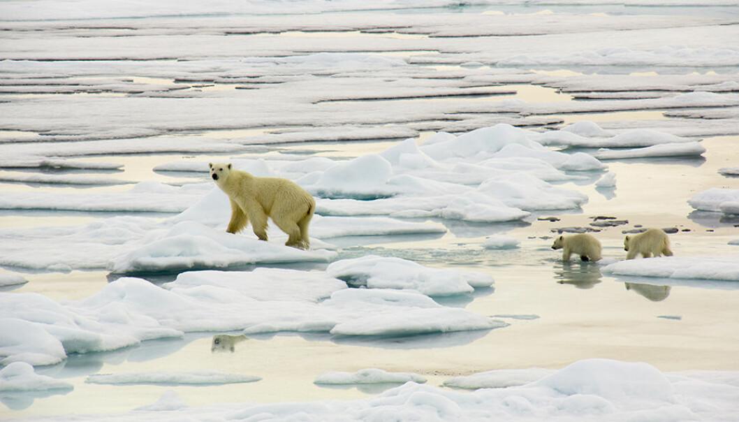 Barentshavet er rik på dyr, fugler og fisk. Det norsk-russiske miljøsamarbeidet har nå lansert forslag for å ta best mulig vare på naturmiljøet. (Foto: Ann Kristin Balto, Norsk Polarinstitutt)
