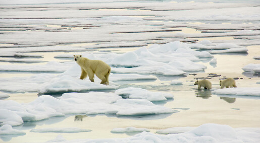 Nytt fra akademia: Skal styrke norsk-russisk miljøsamarbeid i nord