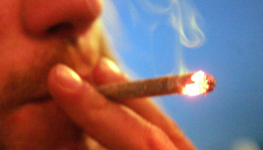 25 ressursterke cannabisbrukere er med i en ny, norsk studie.  (Foto: Colourbox)