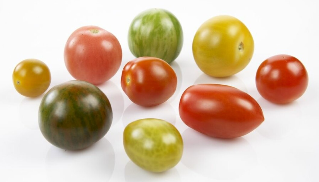 Da forskerne og produsentene forsto hvor sterke meninger forbrukerne hadde, så kom det flere tomatsorter i butikkene, og salget økte.  (Foto: Frukt.no)