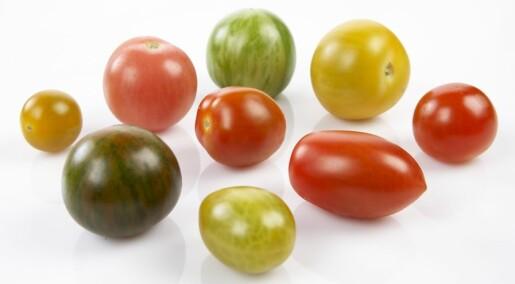 Forskjellige tomater til forskjellig bruk