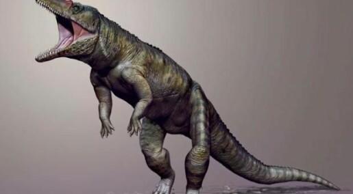 Kolossal krokodille gikk på to bein