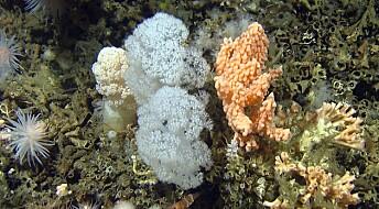 Nord-Atlanteren omringet av koraller