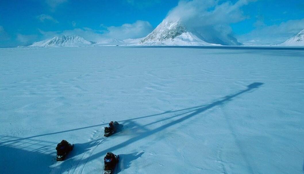 Forskere har undersøkt om snøskuterferdsel påvirker fjellrevens atferd. (Foto: Jon Aars, Norsk Polarinstitutt)