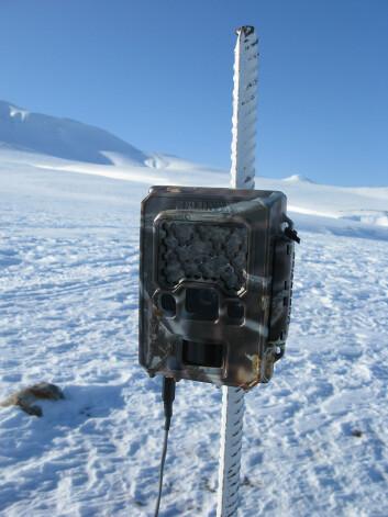 20 slike bokser ble satt opp på ulike steder på Nordenskiöld Land på Svalbard. (Foto: Eva Fuglei, Norsk Polarinstitutt)