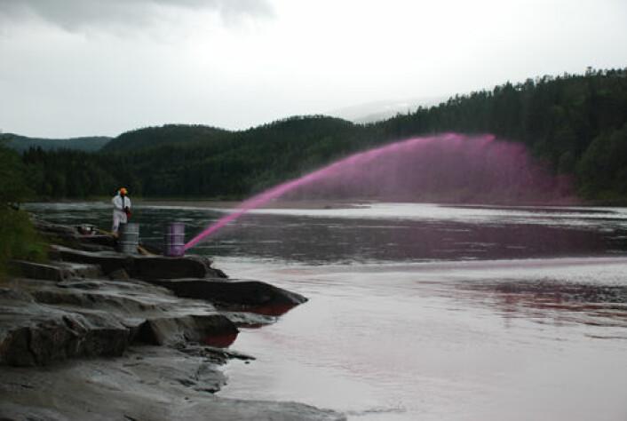 Simulering av rotenonbehandling i Vefsna. Et fluorescerende stoff sprøytes inn for å vise hvordan rotenenon vil oppføre seg nedover elva. (Foto: Geir Vatne)