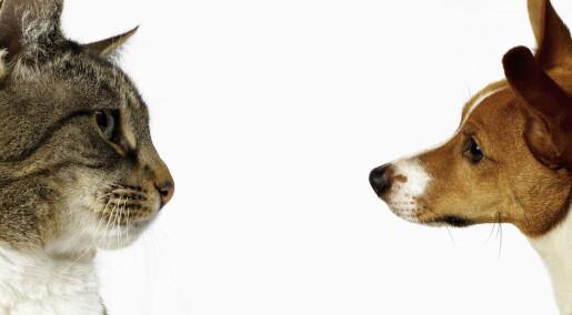 Spør en forsker: Er delt bosted etter skilsmisse skadelig for kjæledyret?