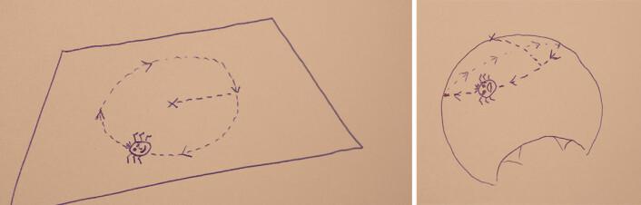 Til venstre: Flatlenderen går i en sirkel og måler omkretsen.<br />Til høyre: Arket er krummet. Flatlenderen opplever at han går i den samme sirkelen, men omkretsen har blitt mindre. (Foto: Arnfinn Christensen, forskning.no)