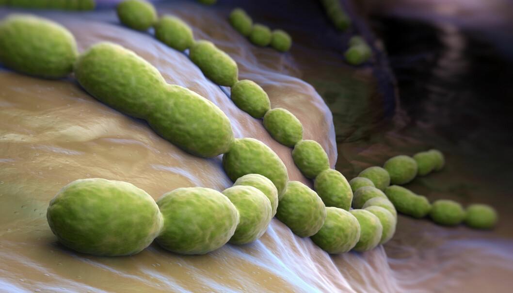 <em>Streptococcus pneumoniae</em> har en helt spesiell evne. Den kan plukke opp egenskaper den trenger ved å ta opp DNA fra omgivelsene. (Illustrasjon: Microstock)
