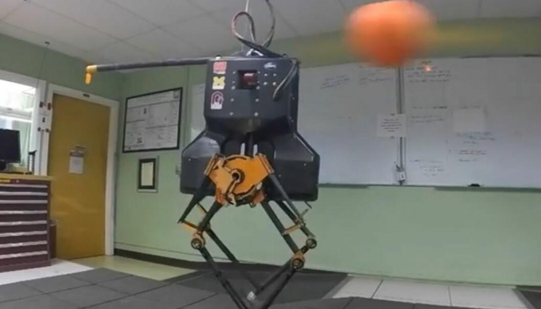 Forskerne bombarderer roboten Atrias med baller, men den danser uanfektet videre. (Foto: Oregon State University)