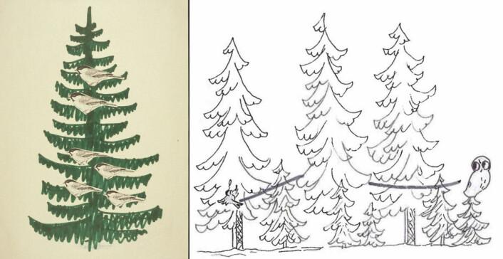 Når vinterflokken er tett samlet, er meisenes plassering i treet langt fra tilfeldig. Det er konkurranse om å lete etter mat øverst i treet. De gamle fuglene leter etter mat i øvre halvdel av trærne og de unge i nedre halvdel, et område av treet hvor risikoen for å bli tatt av en fiende er størst. Øverst holder den gamle hunnen til, godt vernet av maken som tvinger de unge hannene til å holde seg lenger nede. En flygende ugle eller hauk blir oppdaget raskest hvis den flyr høyt. Utbyttet for predatoren er derfor størst når angrepet skjer lavt.