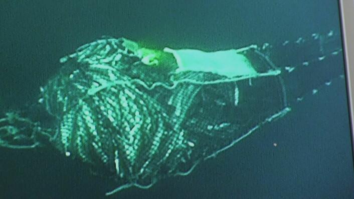 Slik ser det ut når trålposen er full nok til at fangstbegrensingen begynner å fungere, hvis man vil fange 5 tonn torsk. (Foto: Havforskningsinstituttet)