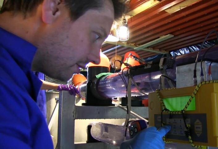 Harald Takle forbereder kondistest for laksen i Nofimas forskningsstasjon på Sunndalsøra. (Foto: Fra video av Sven Martin Jørgensen/Nofima)