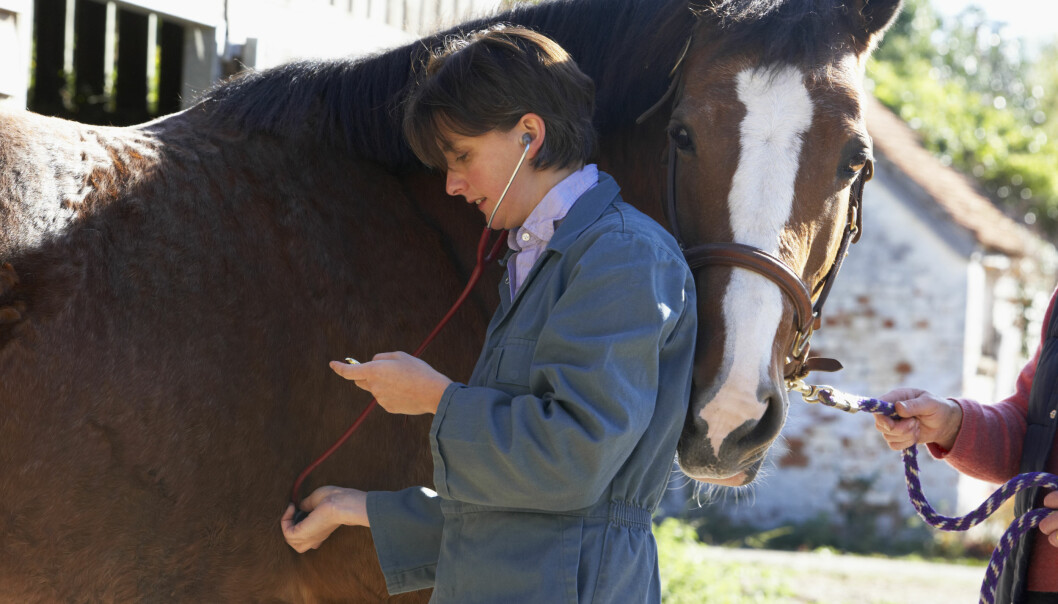Et virus hos hester ligner hepatitt C i mennesker. Dermed kan hestene brukes til forskning på vaksiner. (Foto: Colourbox)