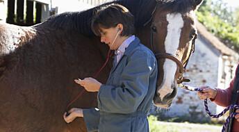 Hesten kan hjelpe mot hepatitt C