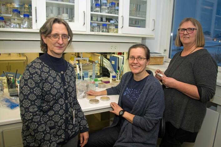 Mikroskopet og cellekulturane er til god hjelp, men strekkodar gjer jobben enda enklare og raskare for Maria Herrero (frå venstre), May Bente Brurberg og Venche Talgø. (Foto: Georg Mathisen)