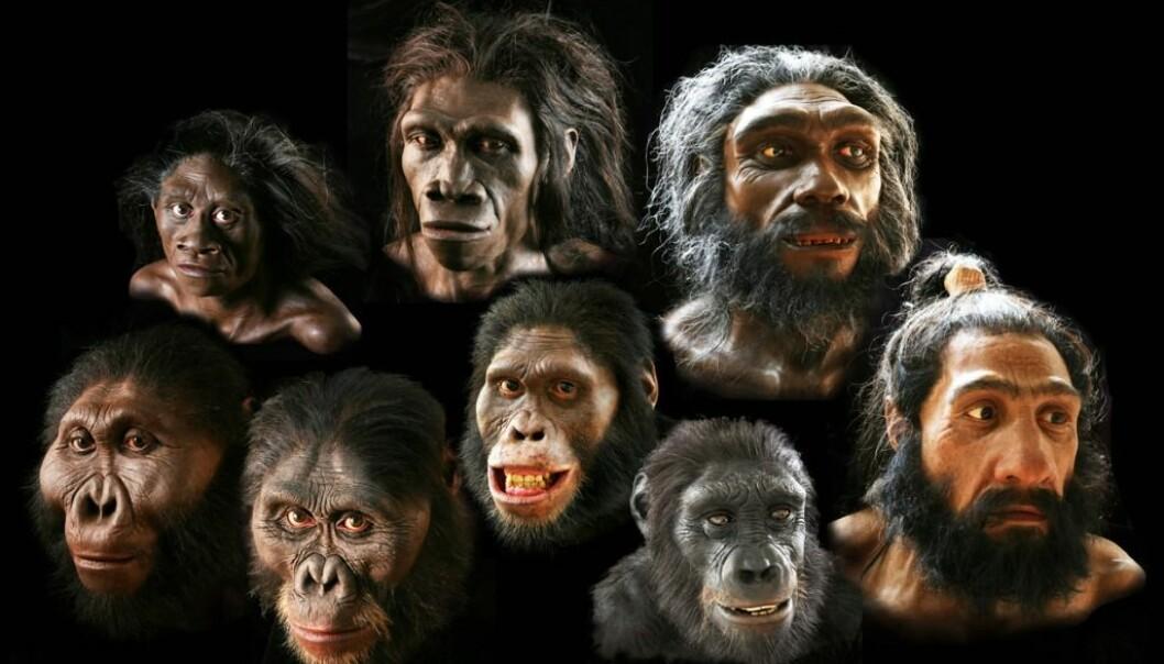 I dag finnes bare én art av menneskedyret. Selv om mange av slektningene våre lignet oss, så døde de alle ut. (Foto/montasje: Smithsonian's Human Origins Program)