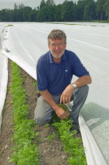 Gulrotdyrker Jens Kase behandler gulrøttene pent slik at de skal smake godt. Men det holder ikke med god behandling hvis ikke gulroten dyrkes i riktig jord.  (Foto: Georg Mathisen)