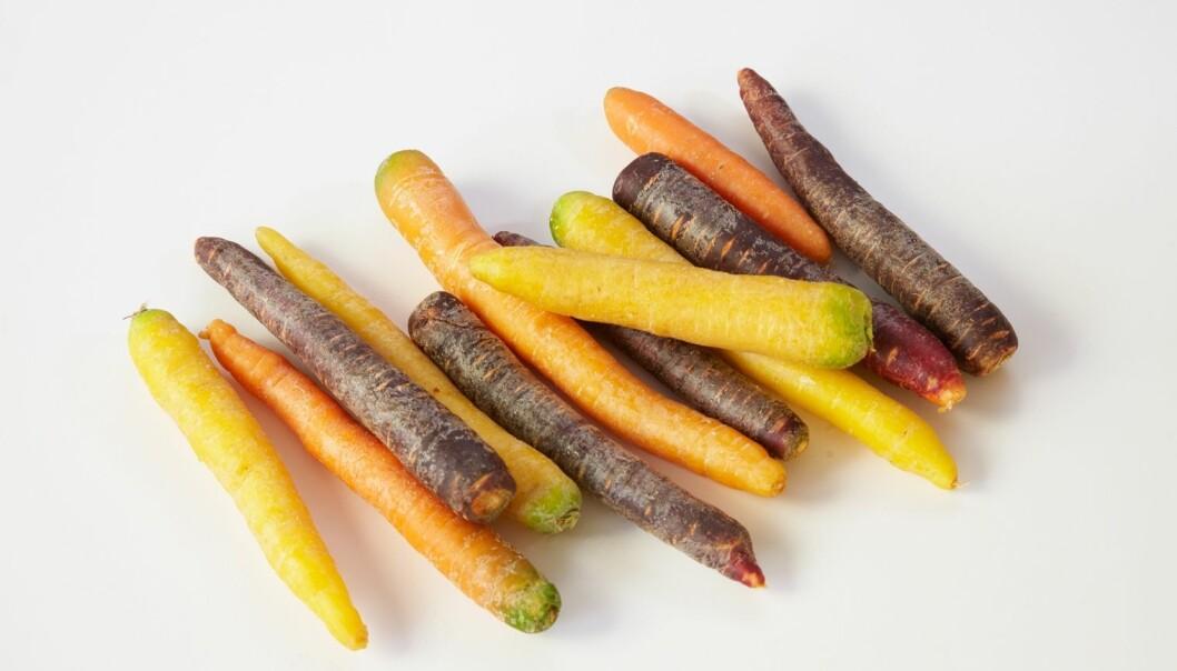 Gulrøttene finnes i flere farger og varianter enn noen gang tidligere.  (Foto: Synnøve Dreyer, Opplysningskontoret for frukt og grønnsaker)