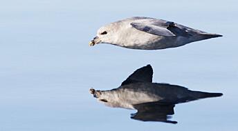 9 av 10 havhester har plast i magen