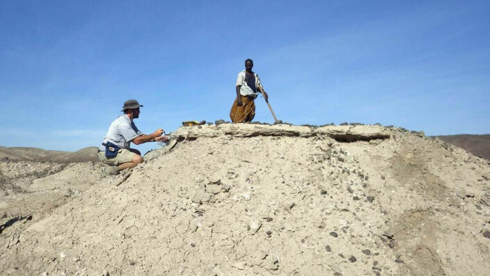 En amerikansk paleoantropolog og en etiopisk medhjelper på funnstedet i Ledi-Geraru-området i Afar-provinsen i Etiopia.  Foto: J. Ramon Arrowsmith