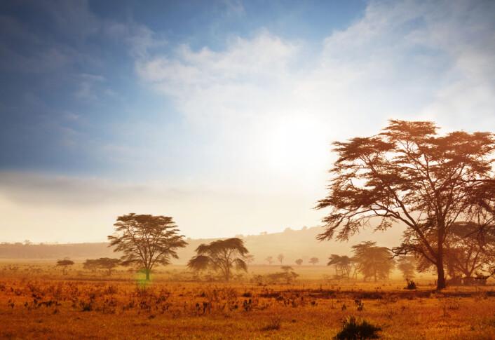 Da LD 350-1 gikk rundt på jorda for 2,8 millioner år siden, var funnstedet i Etiopia en gresslette med busker og enkelte trær.  (Illustrasjonsfoto: Colourbox)