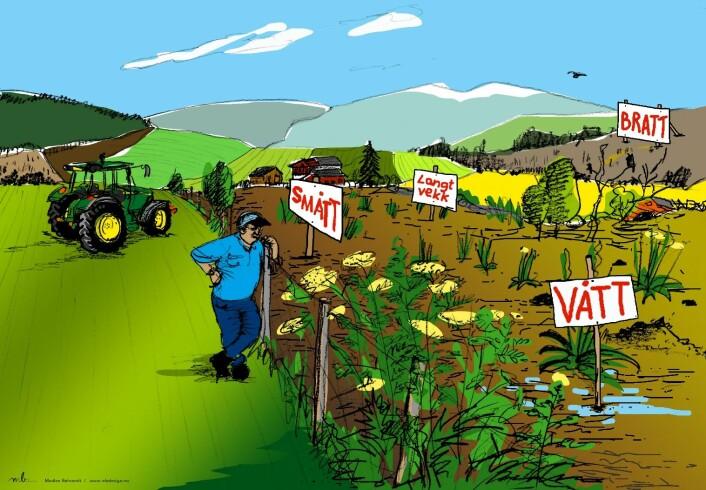 Flere forhold har betydning når bonden vurderer å leie jord av andre. (Foto: (Illustrasjon: Madelen Berent))