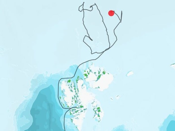 Lance's posisjon så langt under toktet. Ikke noen rettlinjet bevegelse i sjøisen der oppe i Polhavet, nei. (Bilde: Norsk Polarinstitutt)
